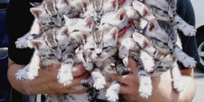 Россиянам запретят продавать животных через интернет